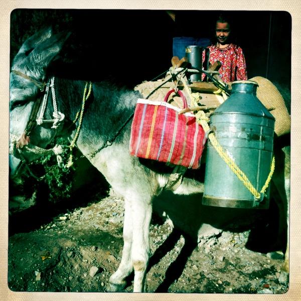mex milk donkey